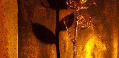Golden-Rose-Broken