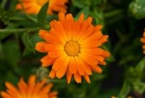La Fleur Avec Moi Nom